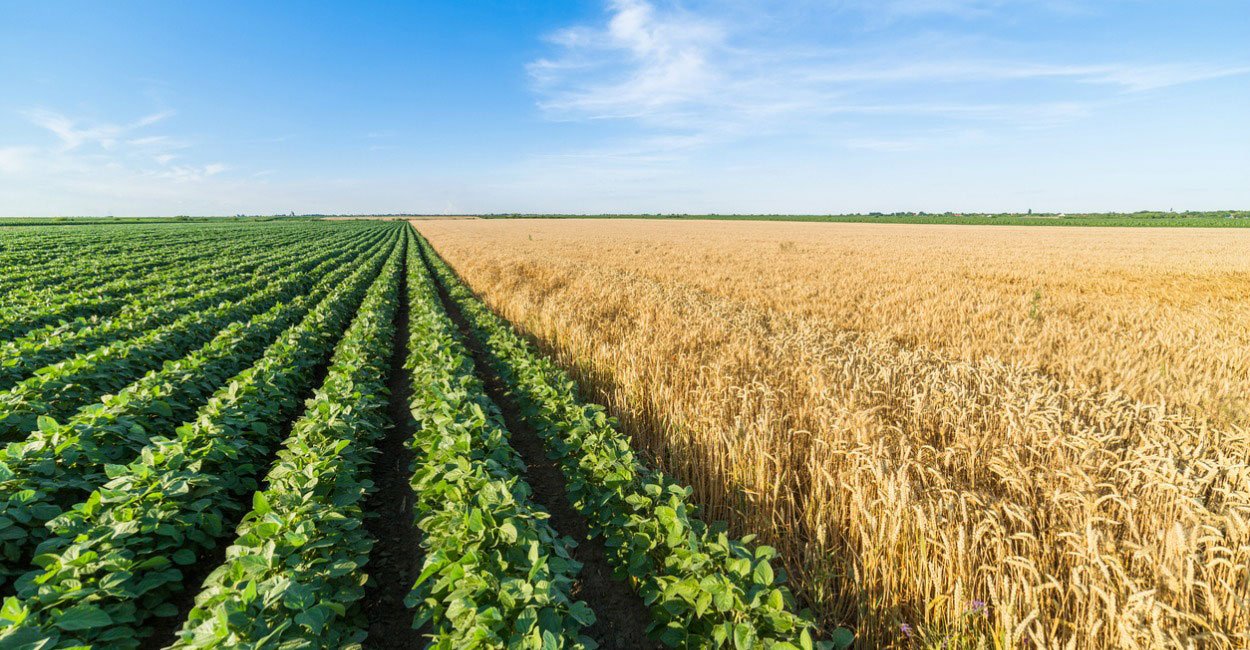 Fare le farm in Australia