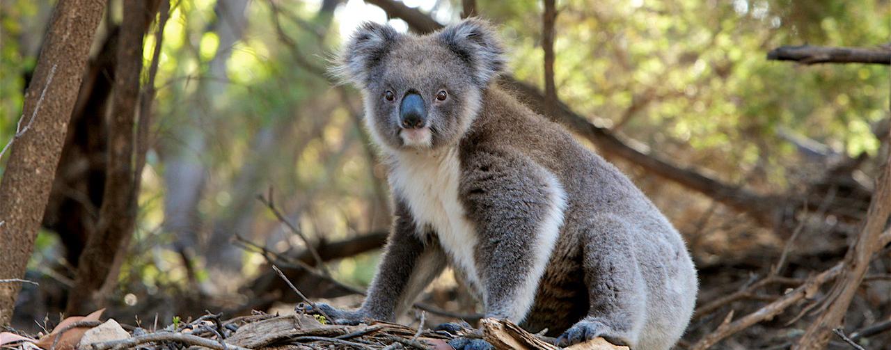 Alla scoperta della Flora e Fauna Australiana
